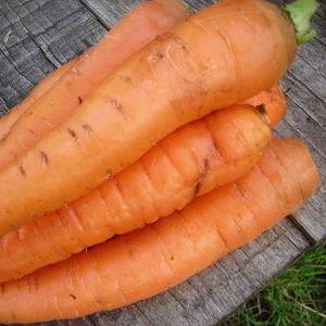 Овочі гуртом та роздріб