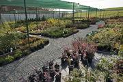 Оптовая и розничная продажа хвойных и лиственных декоративных растений